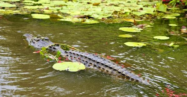 カカドゥ国立公園