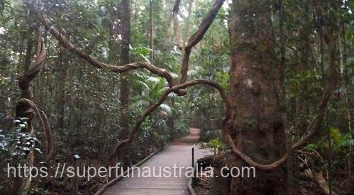 マレーニ― オーストラリア Maleny